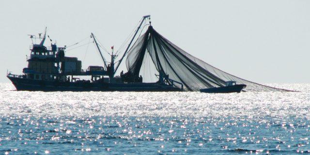 balıkçılık